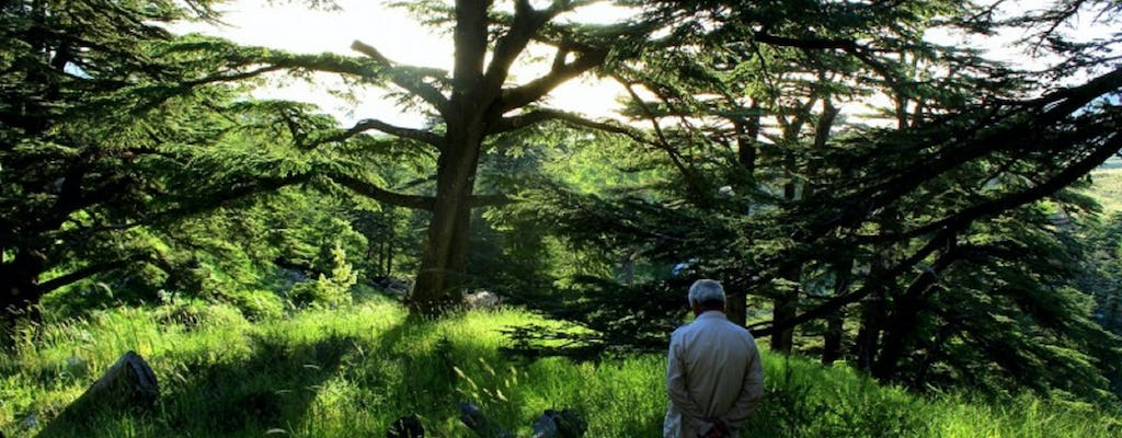 The Cedars Forest hiking full-day-tour