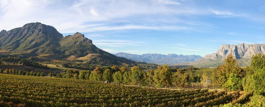 Full-day Cape Winelands private tour