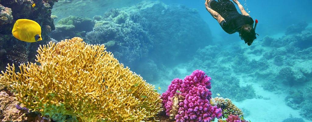 VIP snorkeling cruise to Tiran Island