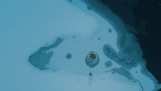 Galleggiante artico nella regione dei laghi