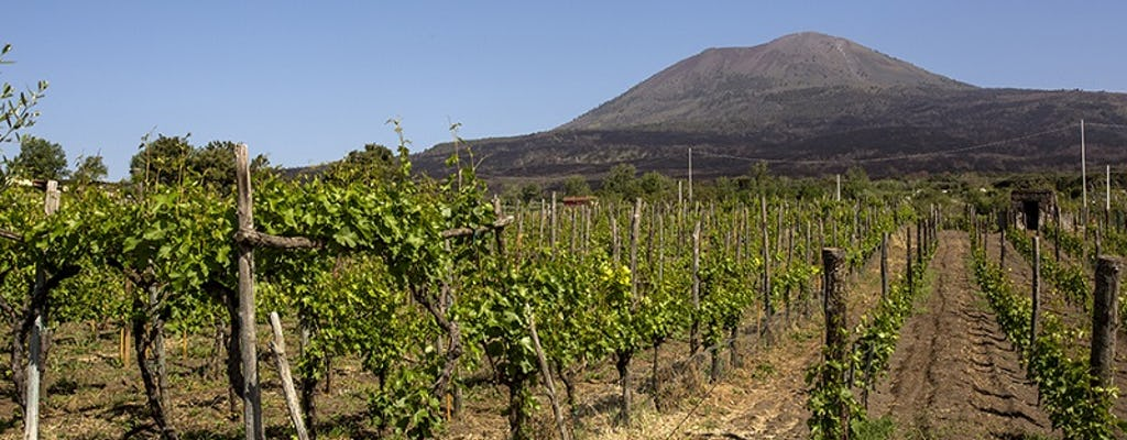 Vesuvius organic wine tasting with lunch