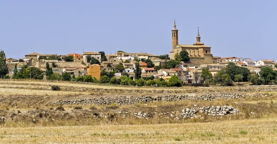 Full-day wine tour and visit to Goya's birthplace