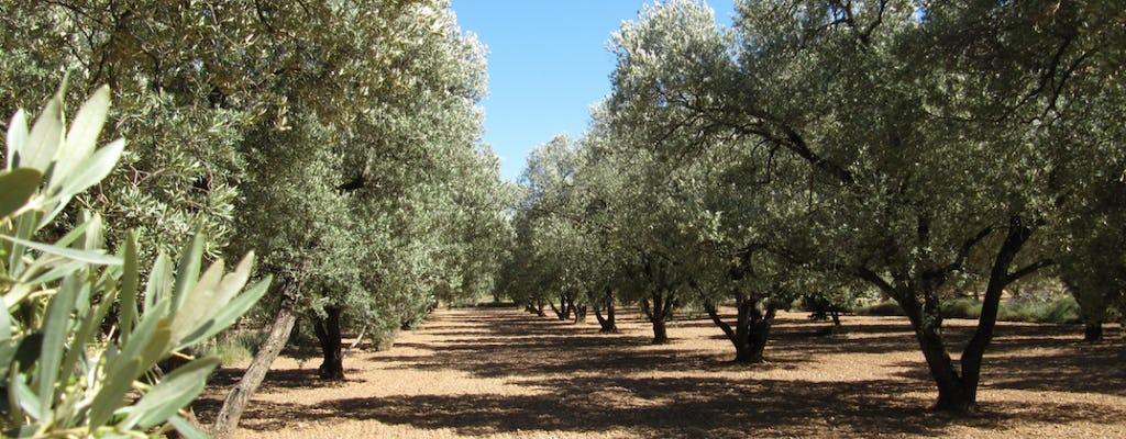 Wycieczka po oliwie z oliwek i wizyta w historycznej wiosce Belchite