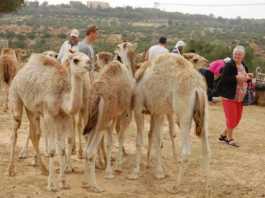 Tunezyjska pustynia - wycieczka z karawaną wielbłądów