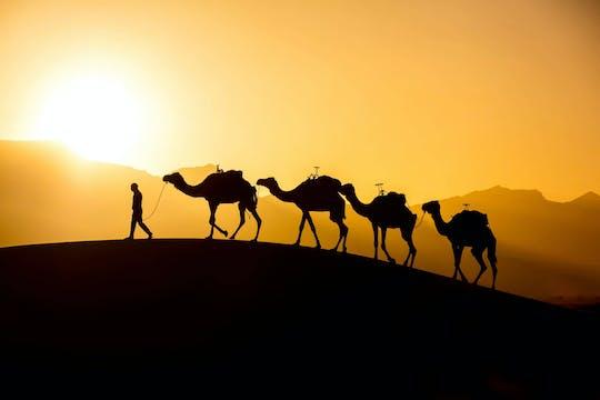Balade en chameau et barbecue au coucher du soleil