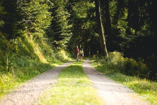 Caminata panorámica privada por la Selva Negra con un local