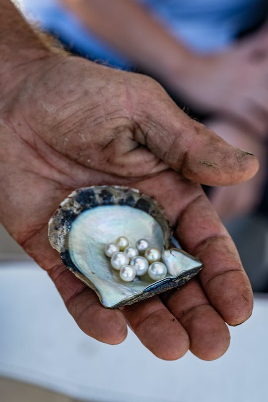The Ultimate Pearl Farm Experience in Hawkesbury