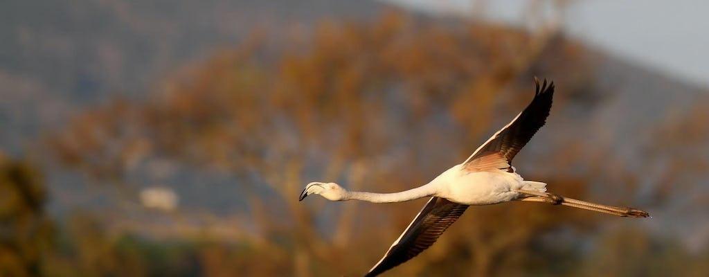 Excursion d'observation des oiseaux d'une demi-journée au lagon de Formosa
