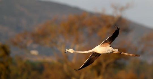 Passeio de meio dia para observação de pássaros na lagoa Formosa
