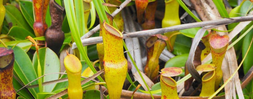 Trilha da natureza Copolia de Mahé