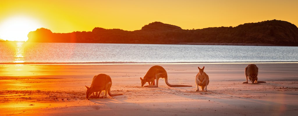 Kangaroo on the Beach at sunrise tour