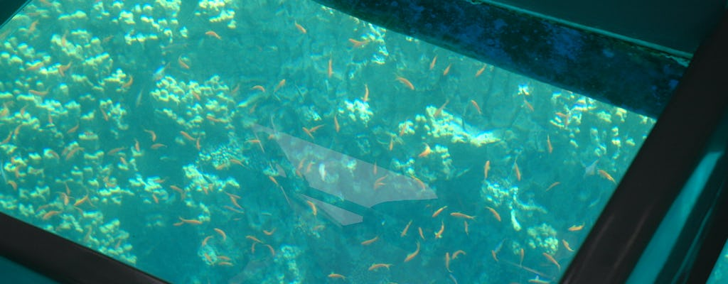 Glass bottom cruise in Aqaba