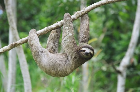 Panama's Eco-Canal exhibitions and Sloth Sanctuary tour