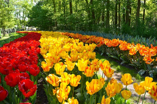 Keukenhof fast-track ticket and transfer with THIS IS HOLLAND