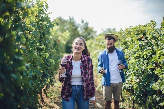 Wijnproeverij en wijnmakerij-tour in Noto