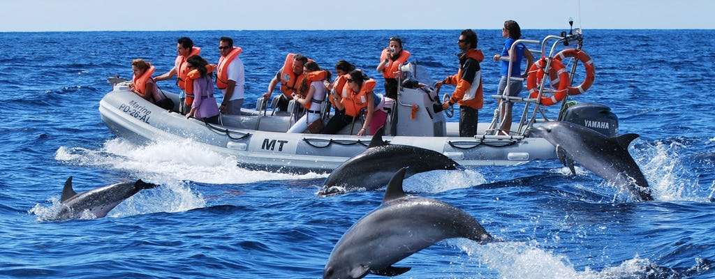 Tour di avvistamento di delfini e balene da Lajes do Pico