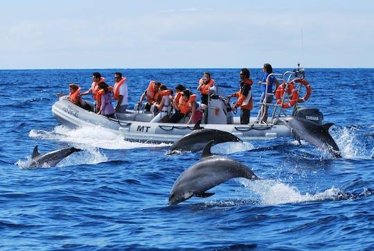 Дельфинов и китов тур из Лажеш-ду-пику