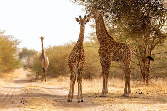 Las Narodowy Bandia: półdniowe safari z Dakaru