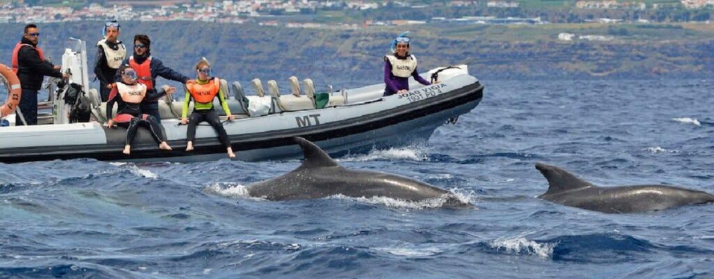 Schwimmen in kleinen Gruppen mit Delfinen aus Lajes do Pico