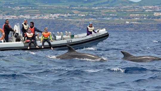 Small-group swim with dolphins from Lajes do Pico