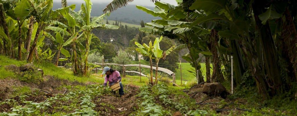West-Panama agro-tour