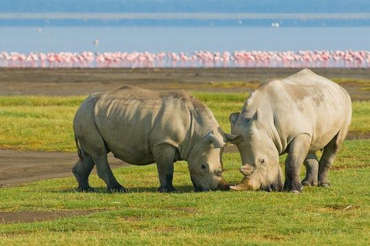 Lake Nakuru and Lake Naivasha National Park 2-day safari