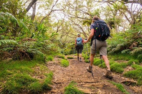 Остров Реюньон тропический лес Белув и поход на смотровую площадку Тру де Фер