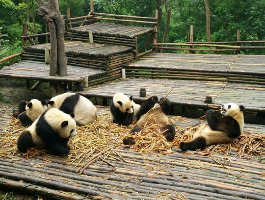 All-inclusive Panda trip and customizable sites