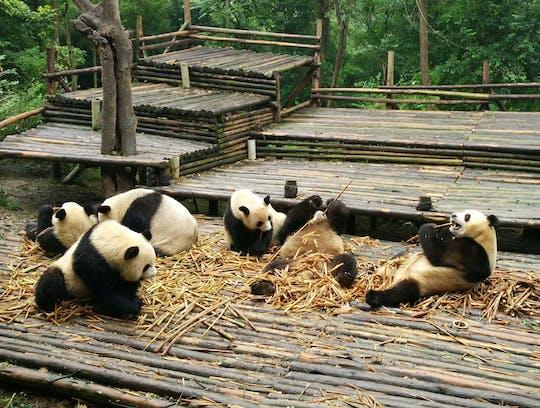 Voyage Panda tout compris et sites personnalisables