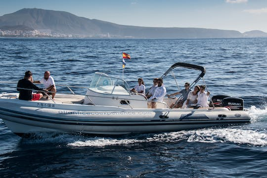 Private Tenerife Dolphin Watching Eco-cruise