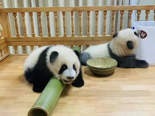 Tour privado de día completo Panda trip y visitas turísticas personalizadas por la ciudad