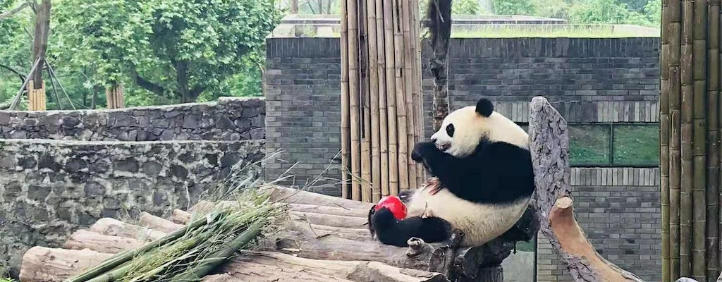 Full day private tour of Panda hometown and Taoist mountain