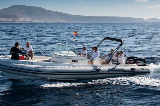 Privé-tour Tenerife Dolfijnen Spotten Eco-Boottocht
