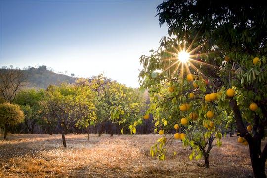 Radtour zu den Citrushainen und ländlichen Bauernhöfen von Ciaculli von Palermo aus