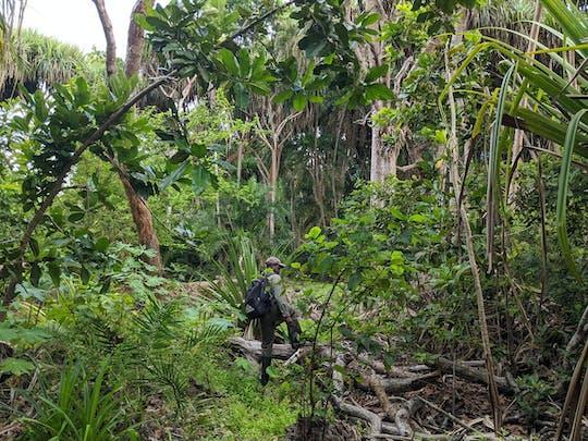 Excursión a pie por Zanzíbar en el bosque de Jozani