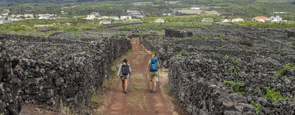 Wandeltocht naar de Vinhas da Criação Velha-route vanuit Madalena