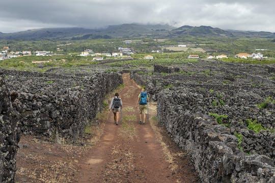 Поход к вин да Criacao Велья маршрут из Мадалена