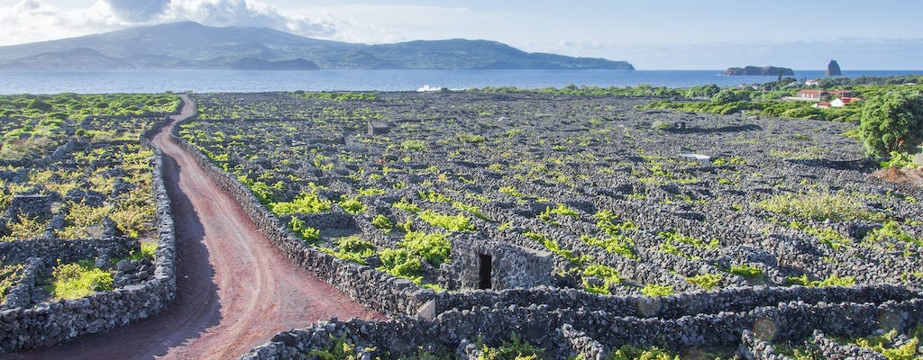 Hiking tour with lunch and wine tasting to Pico Island
