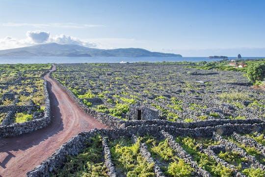 Пешеходная экскурсия с обедом и дегустацией вина в остров пику