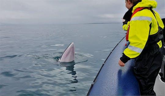 Ребра Экспресс-наблюдение за китами экскурсии из Рейкьявика