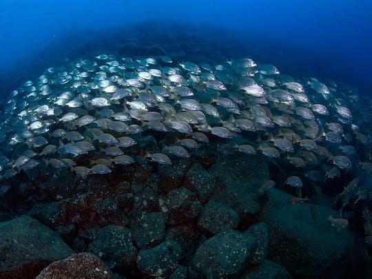 Open Water Cursus met Native Diving