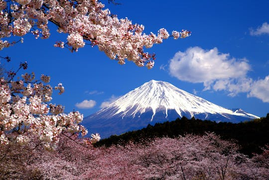 Online experience: Discover Mt. Fuji