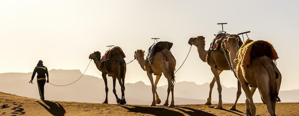 Desert Camel Safari at Agafay