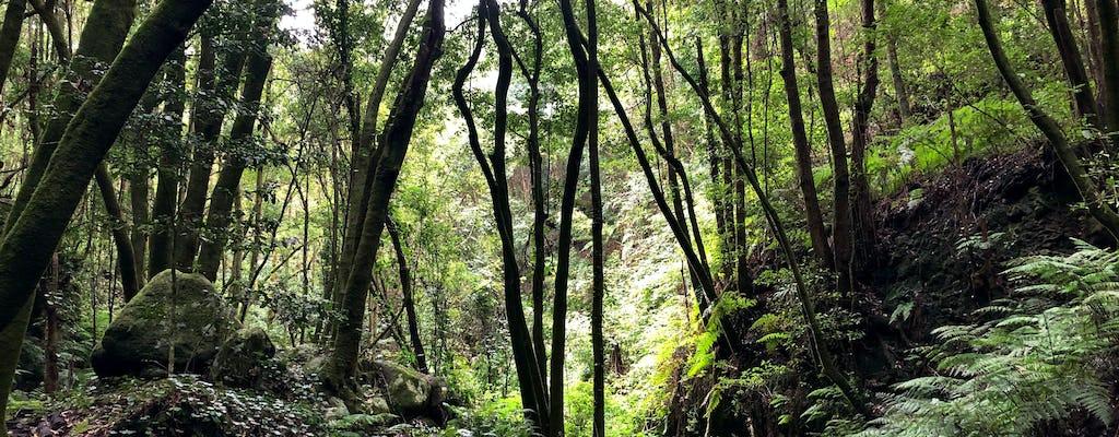 Wandertour durch den Zauberwald von La Palma mit Transfer
