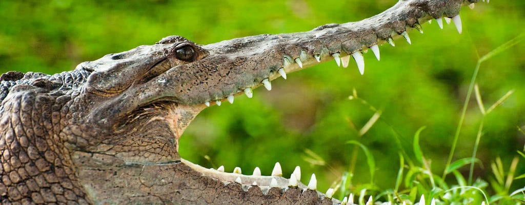 Park Krokodyli