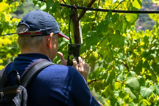 Madeira - Weinverkostungstour und Skywalk-Erlebnis