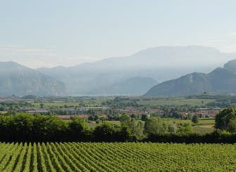 Franciacorta and its wineries by private Minivan from Milan or Verona