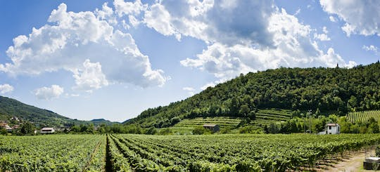 Franciacorta vineyards and farmhouse walking tour with lunch by private Minivan from Milan