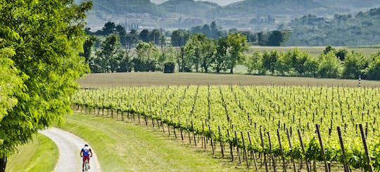Franciacorta cycling tour with lunch and visit of a winery by private Minivan from Milan or Verona