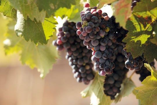 Lake Garda Wine & Oil Tasting Tour